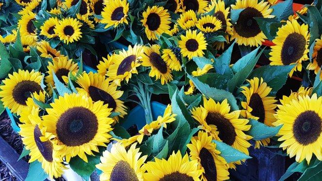Sonnenblumen-Sträuße zum Kauf auf Vertrauensbasis.jpg